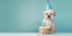 pastel-perros-blog-758x379.png