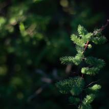 Fynbos5.jpg