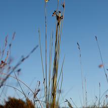 Fynbos6.jpg