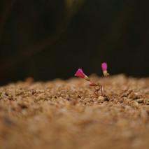 Fynbos9.jpg