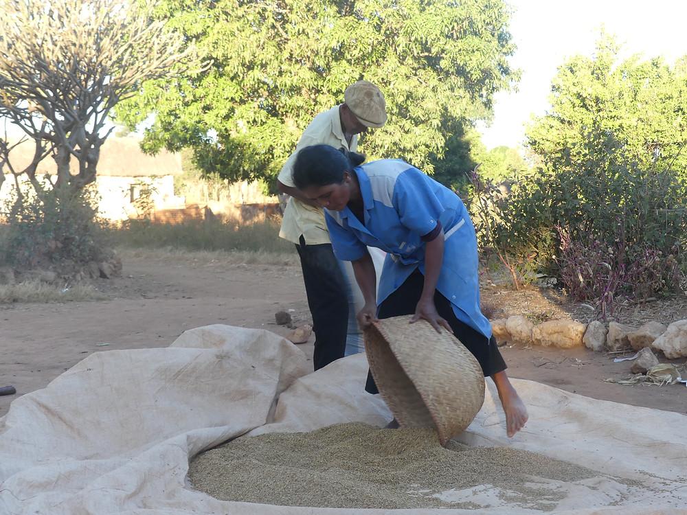 Tonton Jeannot et sa femme préparant le riz