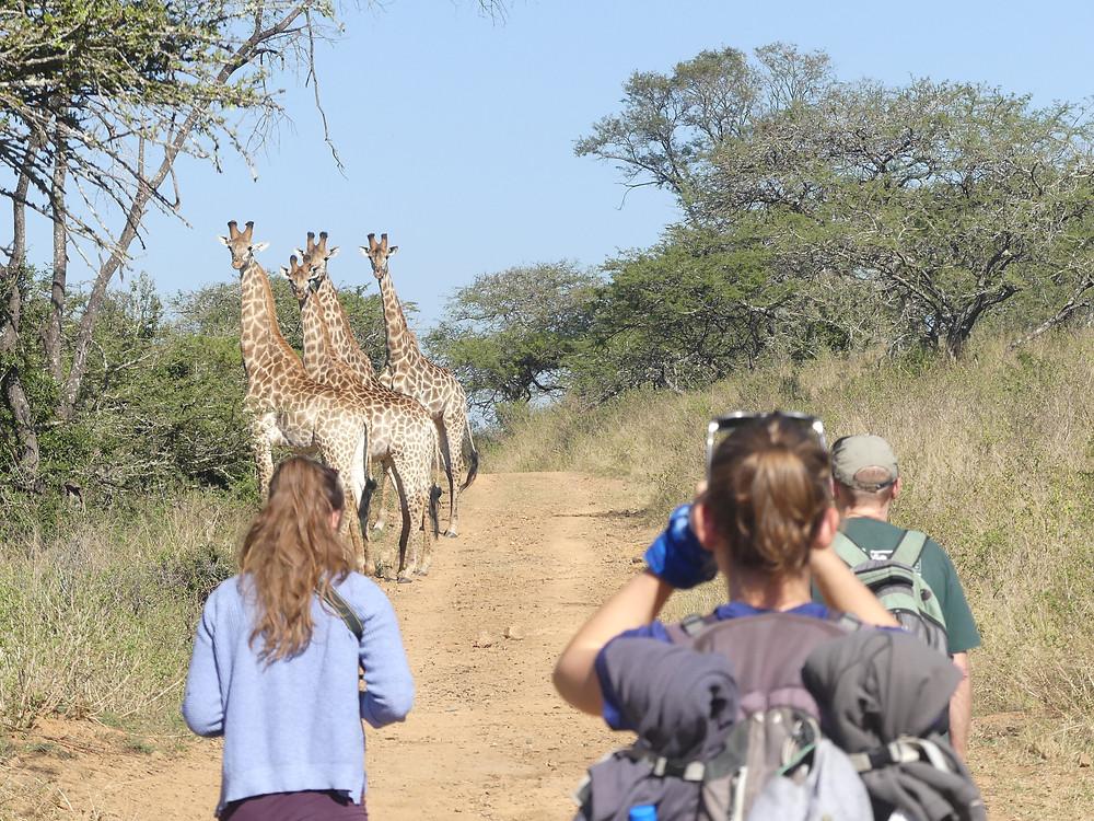 Rencontre avec des giraffes durant notre balade