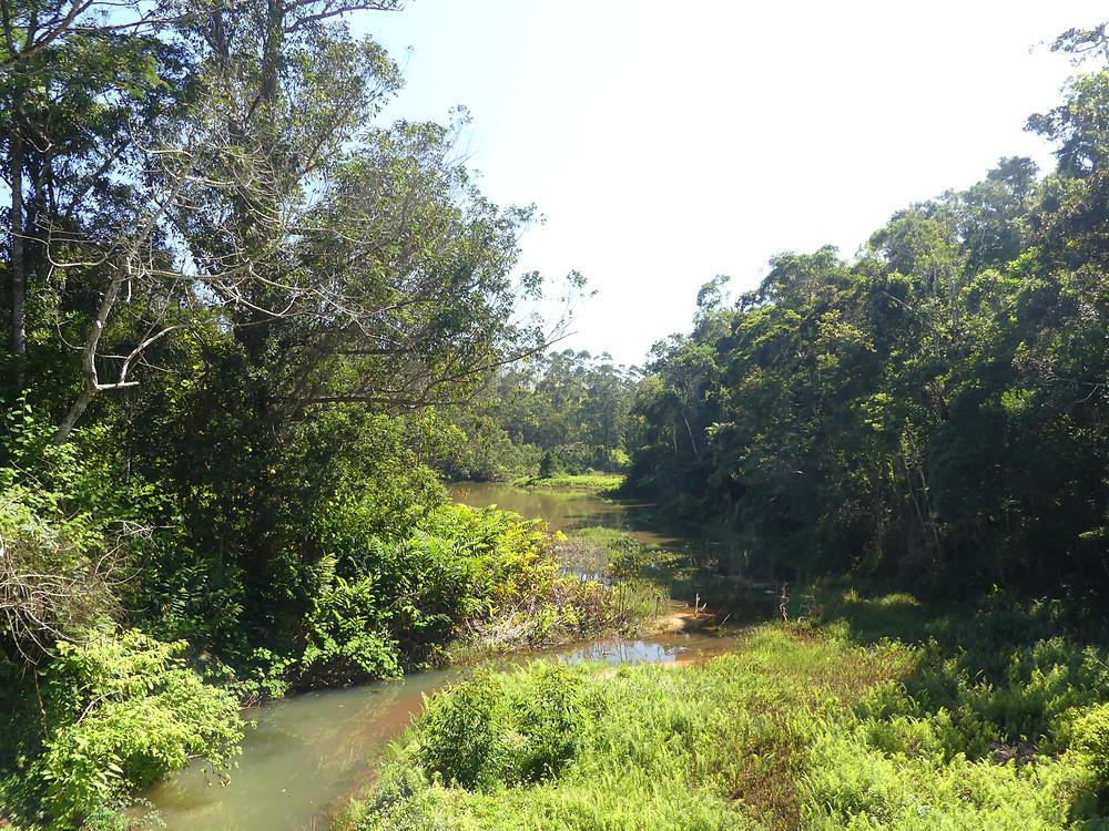Végétation verdoyante d'Andasibe