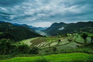Culture du riz dans une vallée de l'Annapurna
