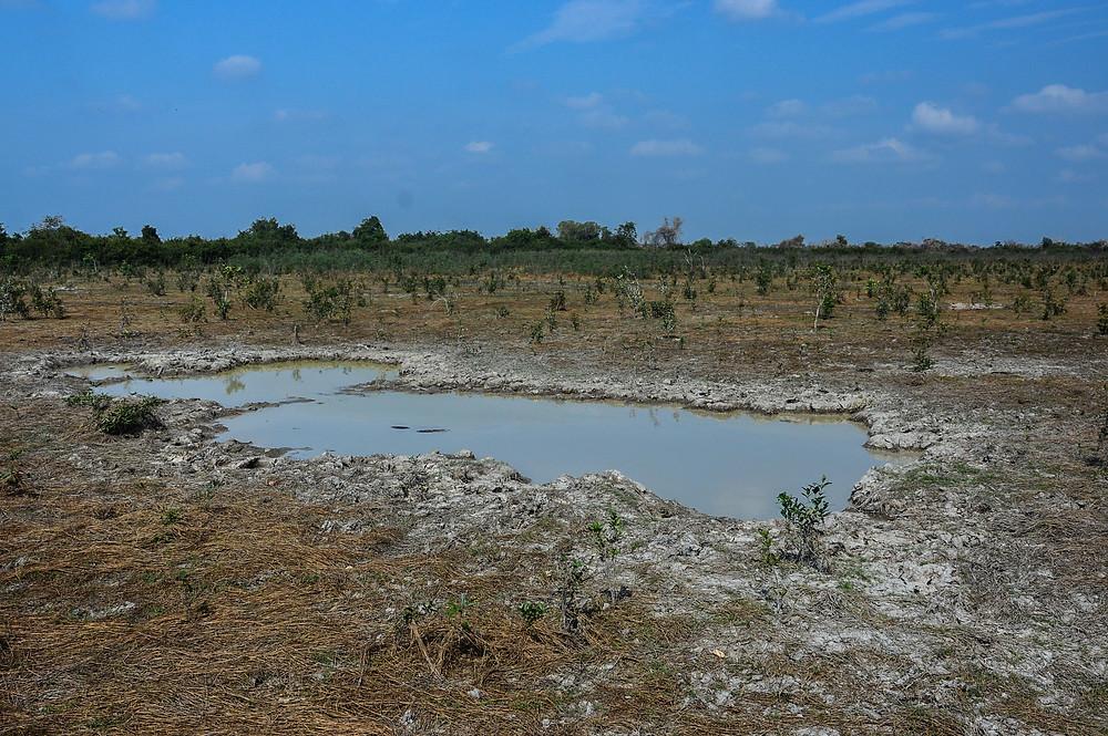 Zone de restoration de la fôret inondée