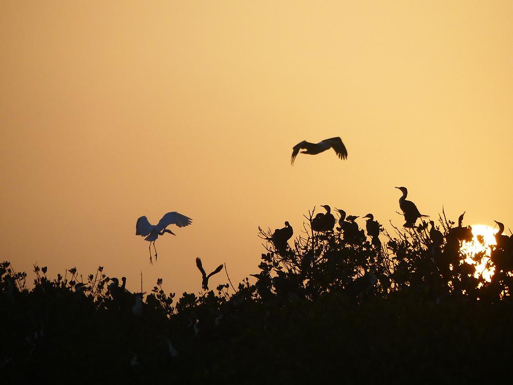 Perchoir aux oiseaux près de Mar Lodj