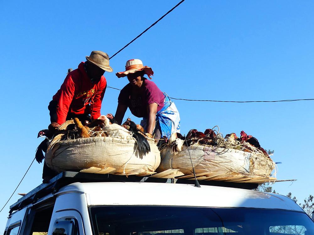 Chargement des poulets sur le taxi-brousse