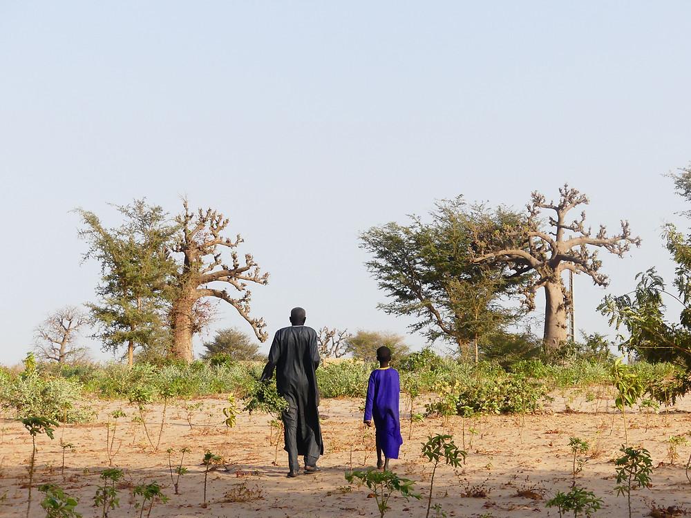 Mr MOR et son fils dans leurs champs
