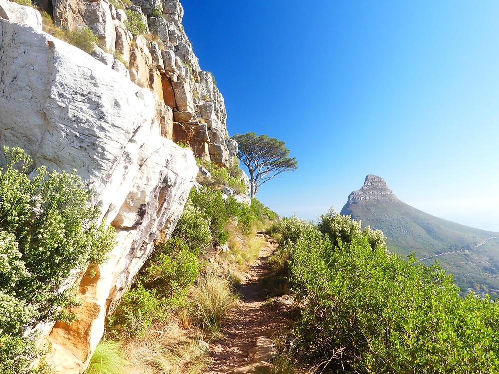 Chemin pou Table Mountain (Lion's head en fond)