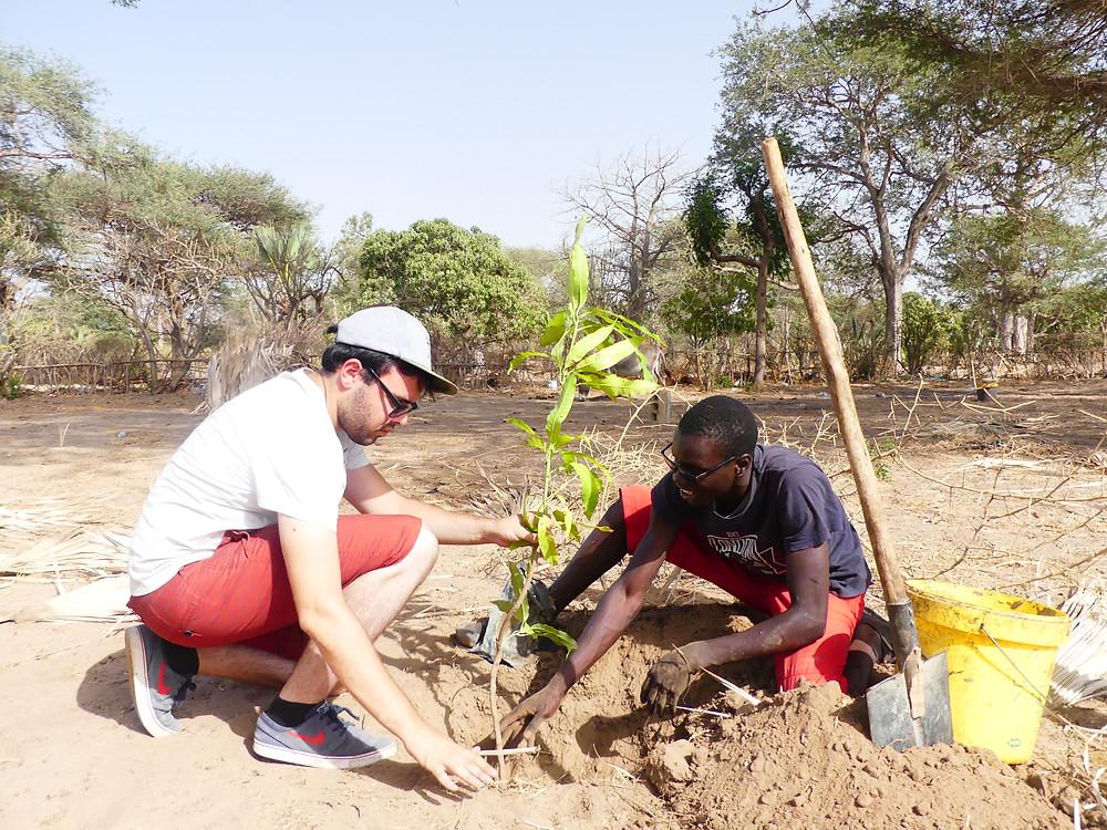Romain et Mathieu en pleine plantation de manguier
