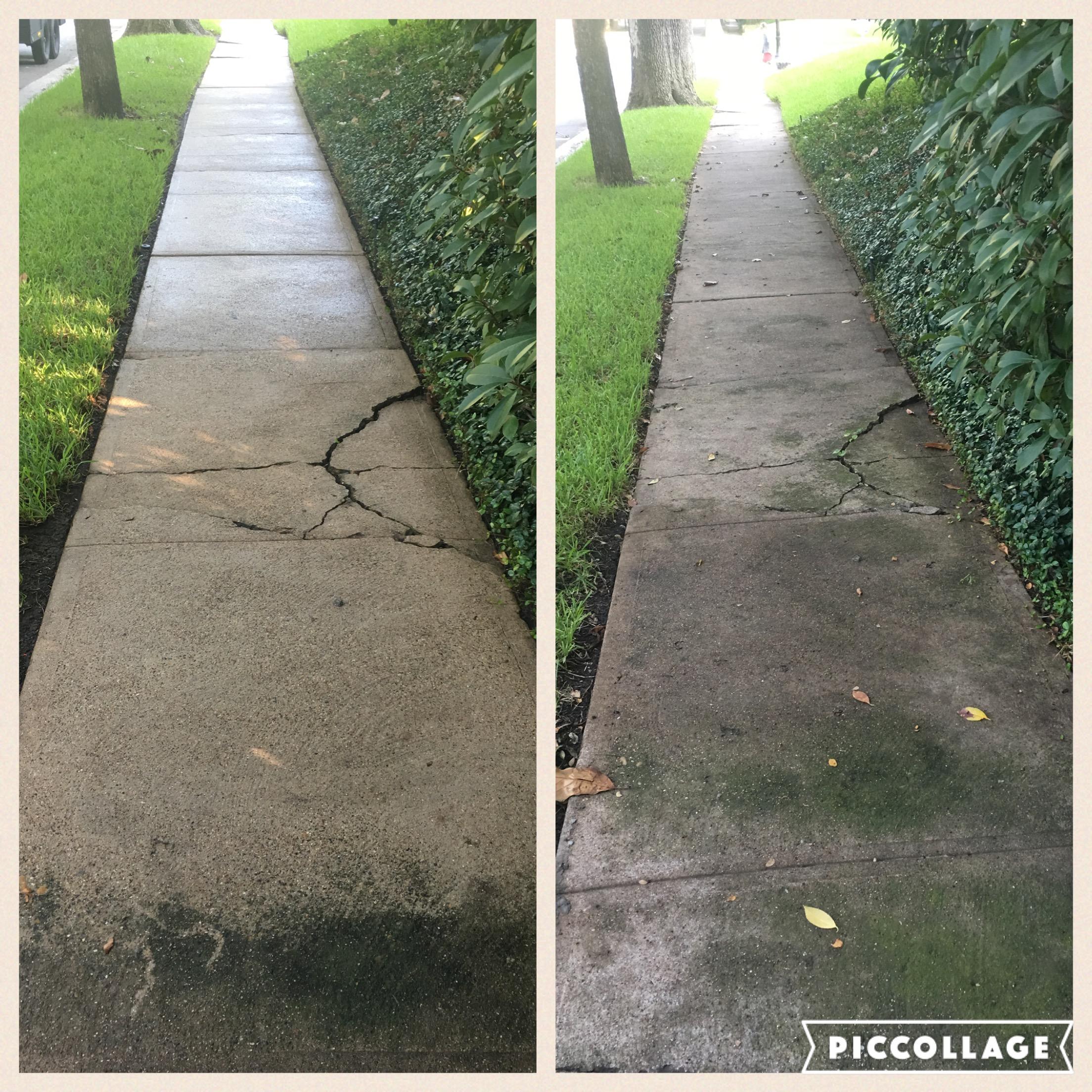Algae mold removal