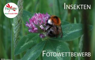 Insekten – die faszinierenden Sechsbeiner – ein Fotowettbewerb des Projektes ProInsekt