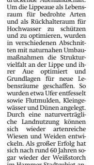"Ankündigung ""Politik im Grünen"""