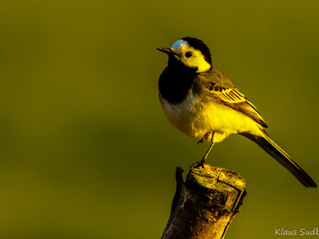 Vereinsabend: Vogelkundlicher Filmvortrag