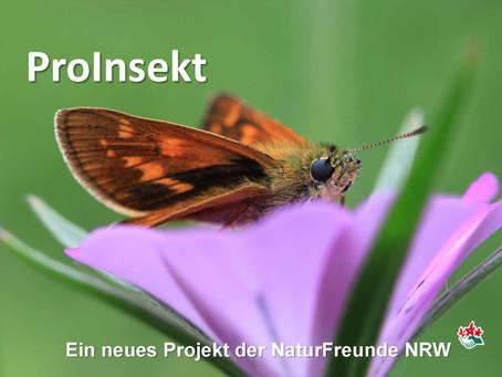 Stiftung Umwelt und Entwicklung fördert ProInsekt