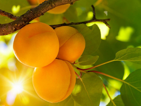 God Requires Us to Bear Much Fruit