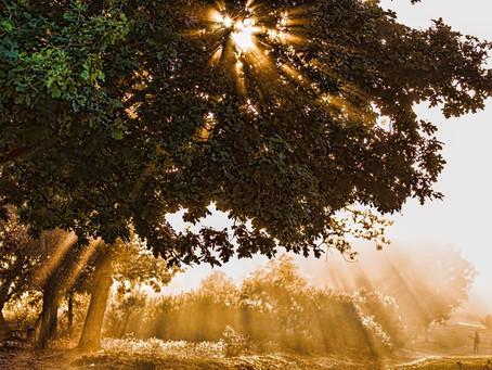 A Flood of Light
