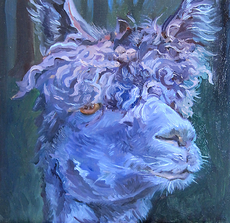 oil sketch - at the alpaca farm