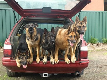 A family of GSDs