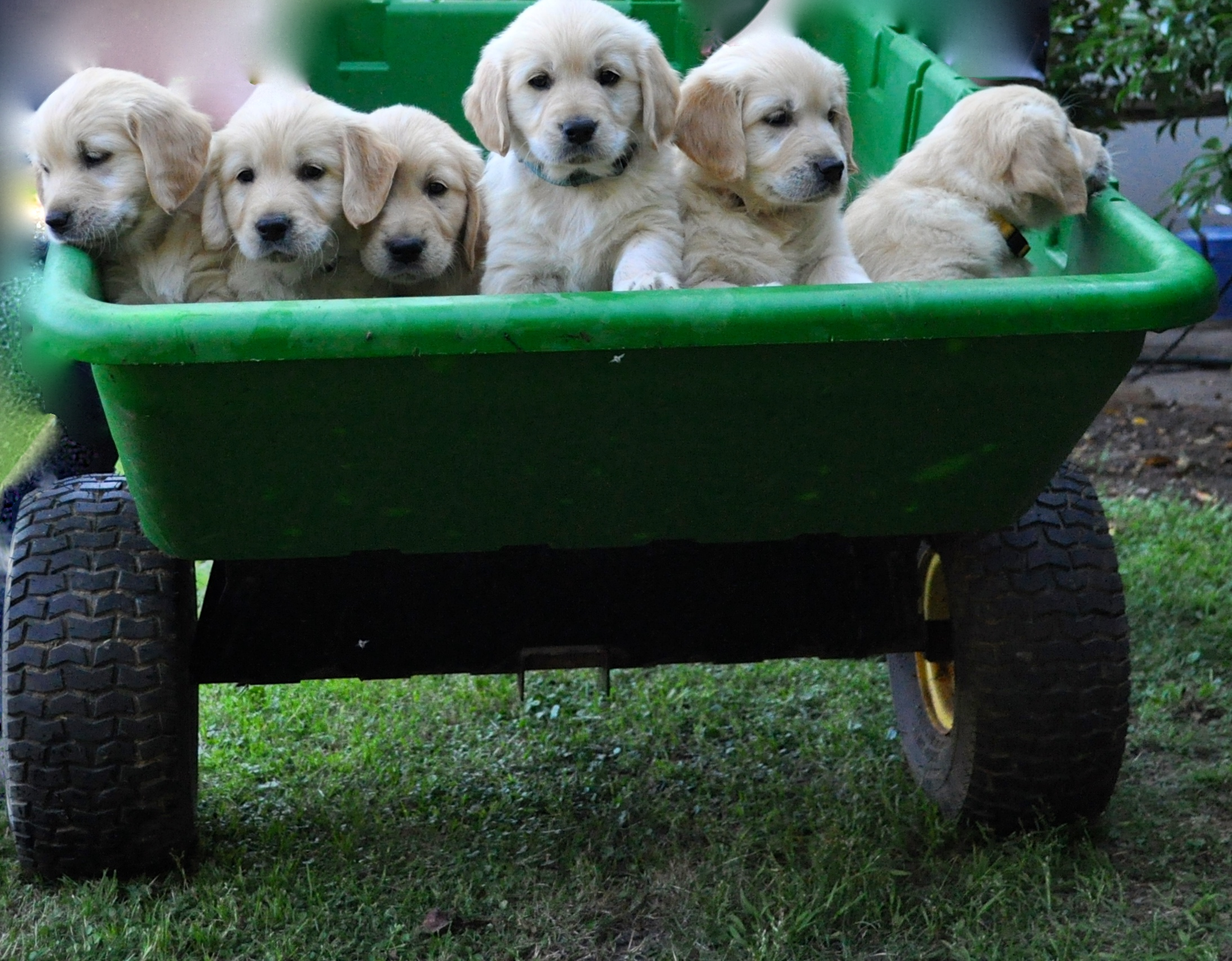A bucket load of puppies!