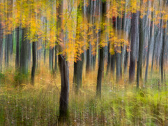 """""""Trees in the WVA Highlands"""" (2015)"""