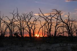 """""""Botswana"""" (2020)"""