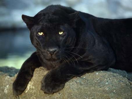 My Sneaky Psyche: The Black Panther and My Spiritual Path