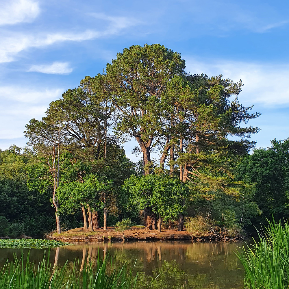 Scenery picture take late afternoon of trees on an island within a lake, with the sun shining on the green leaves and whisps of cloud in a blue sky