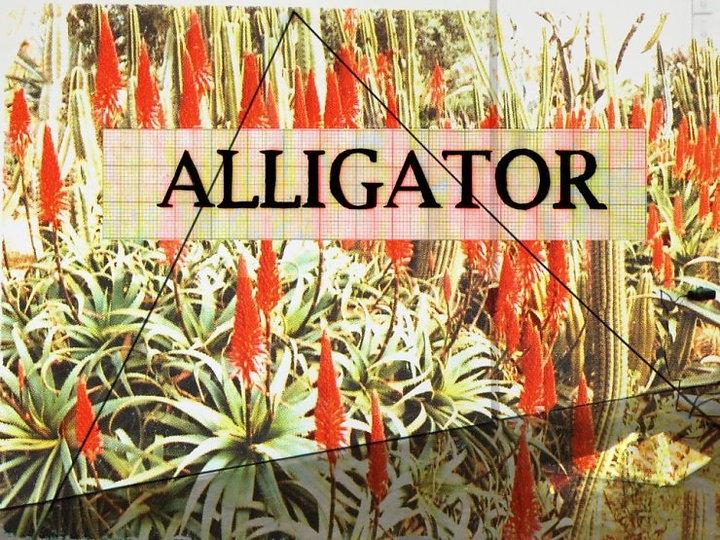 alligator-cover.jpg