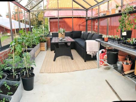 Trädgård & plantering