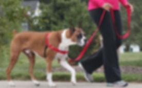easy-walk-fit-leash-tips.JPG