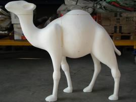 Camel Rohling