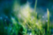 Green-Nature-Grass-Heaven-Bokeh-Water-Dr