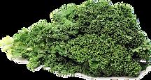 Kale-PNG-Photos.png