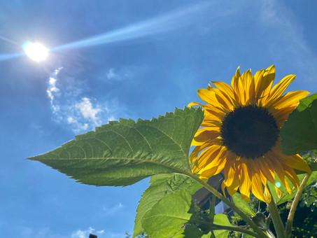 Gardening: nurturing your life
