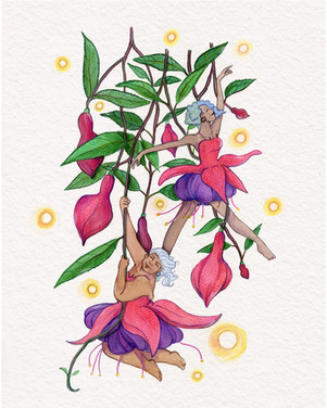 Hybrid Fuchsia Fae