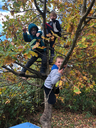 Y2 Forest School: Tree Power