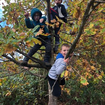Y2 Forest School: Tree Power