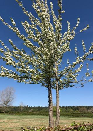 Blossom 1.JPG