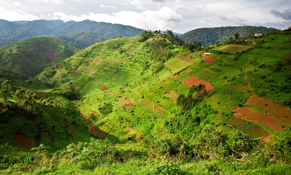 The Rwanda region is humid, green, and rainy, allowing bamboo growth, an inexpensive yet multipurpose plant widely used in tropical areas.