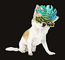 chihuahua%20dog%20with%20bright%20carniv