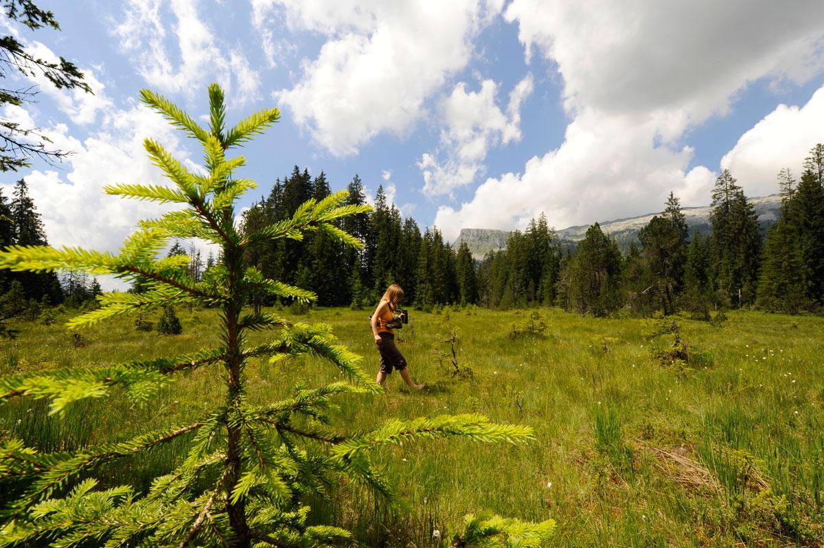 Moor & Flora rund um Salwideli