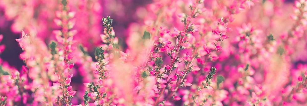 pink_lady_geschenke_fur_frauen.jpg