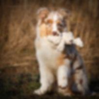 Tier- und Hundefotografie Outdoor