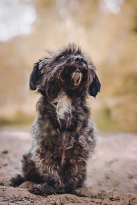 Foto Terrier-Mix