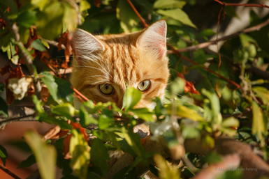 Katze auf Samos_Griechenland