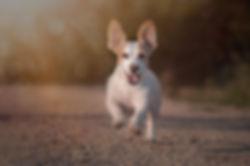 BilderRausch Tir- und Hundefotografie Outdoor