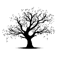 logo_studio_de_lolivier.png