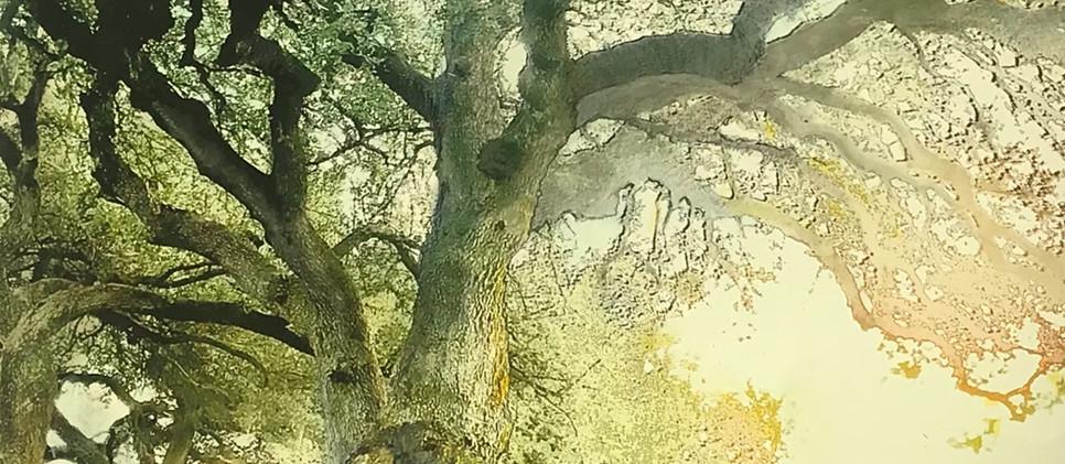 Live Oak, Number Three
