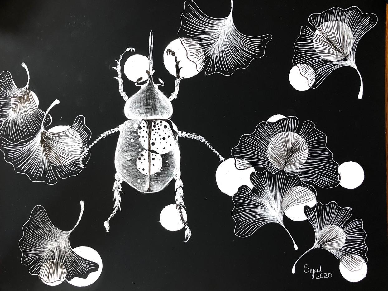 beetle and ginkgo biloba leaves